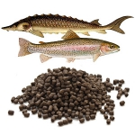 Корма для форели и осетровых рыб